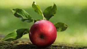Ingrediens-undervisning: eple og epleekstrakt